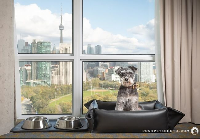 Dog in special doggy bed with a view of CN Tower